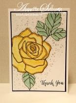 Rose Wonder Daffodil Wasabi